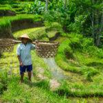 Bali Rice Terraces, Indonesia