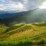 Mam Xoi, Vietnam